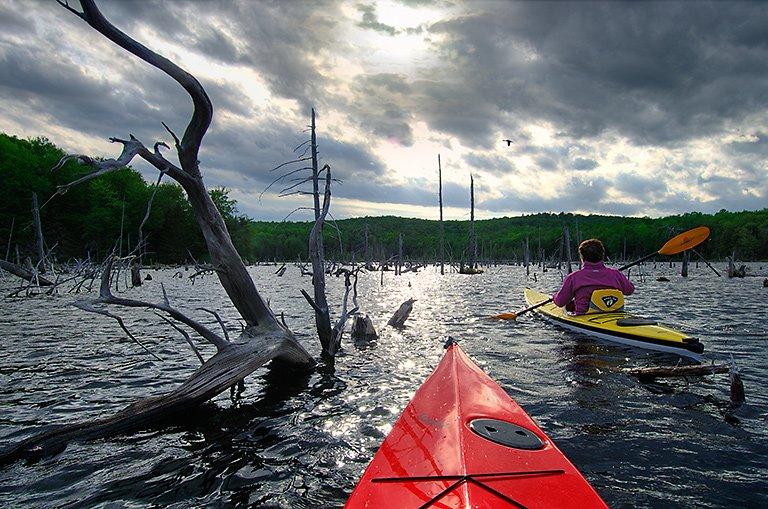 kayaking among the treetops